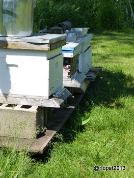 Honeybee hives at our farm in Richmond, IL