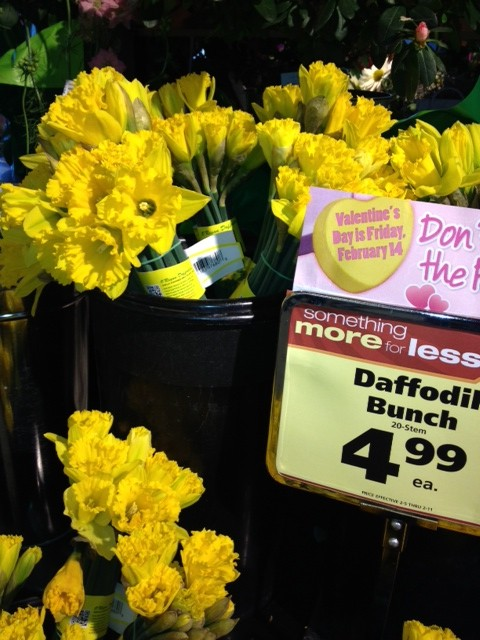 happy valentine's day daffodils